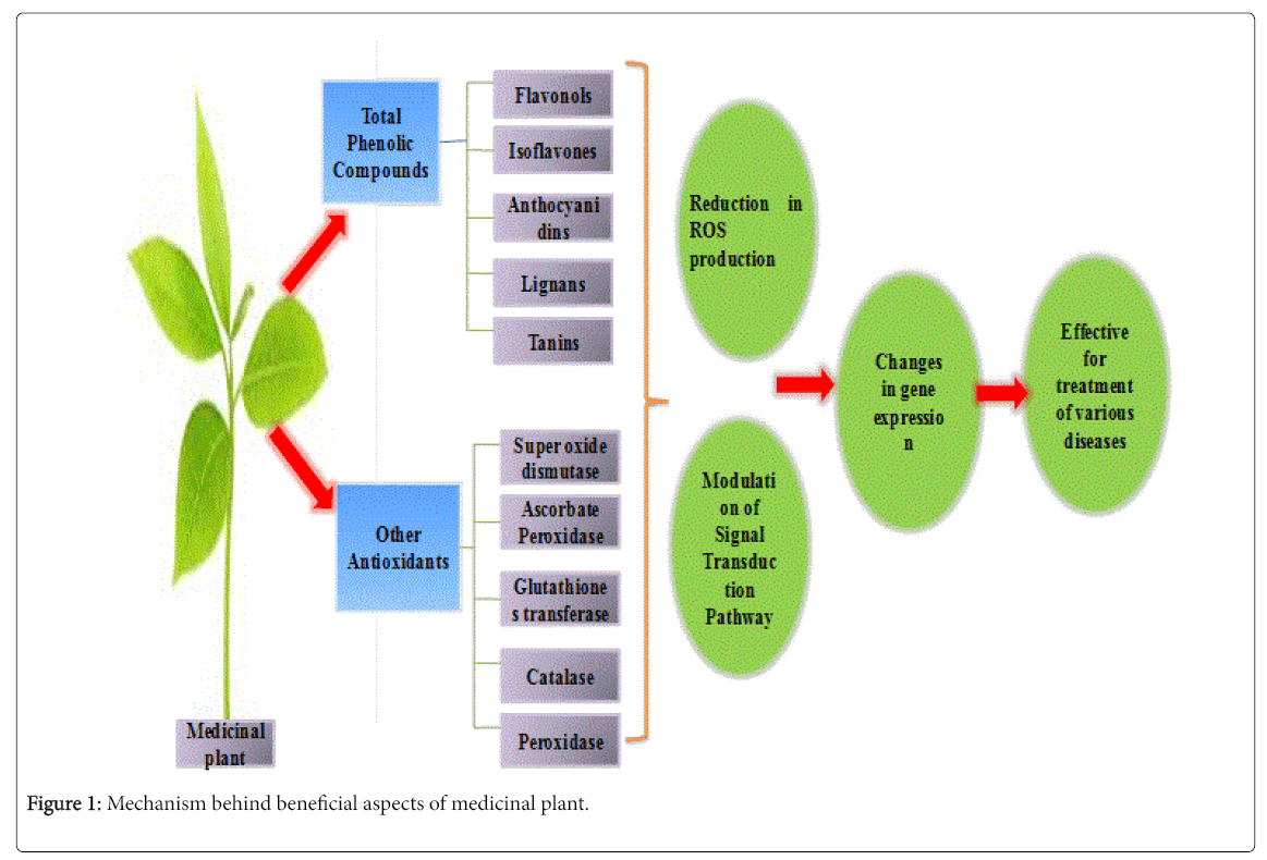 hight resolution of chemical biology therapeutics medicinal plant