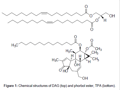 medicinal-chemistry-phorbol-ester