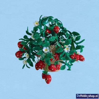 aardbeien-plant