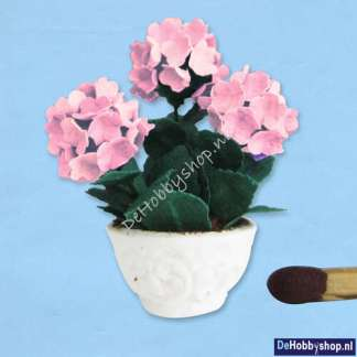 hortensia-roze-24
