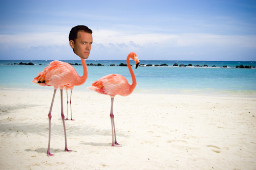 Tom Hanks is a Lot of Animals