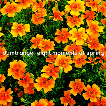 Dumb Angel Eight