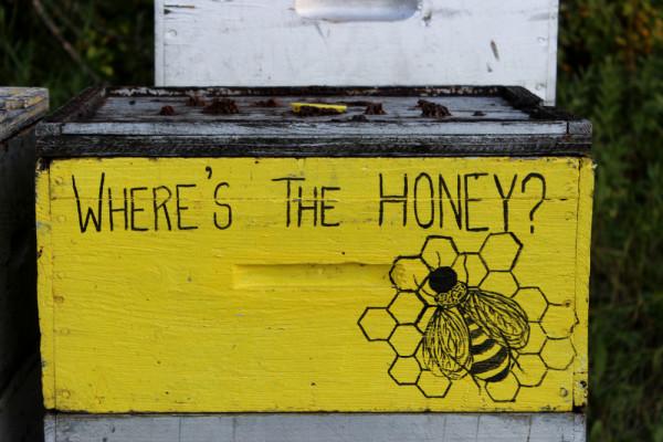 beekeeping10