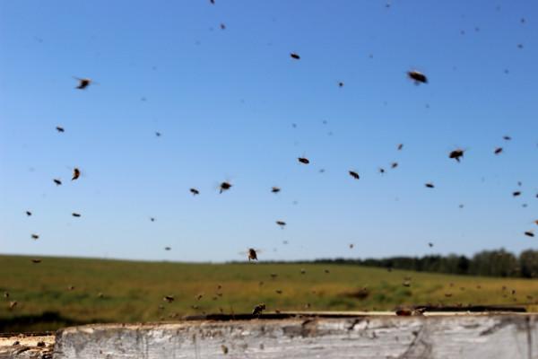 beekeeping2