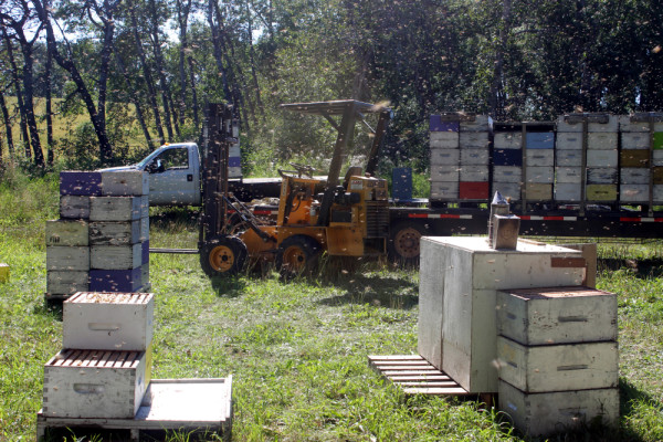 beekeeping3