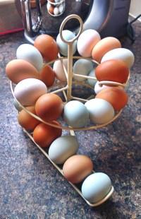 Egg Skelter | Spiral Egg Holder for Storing up to 24 Eggs
