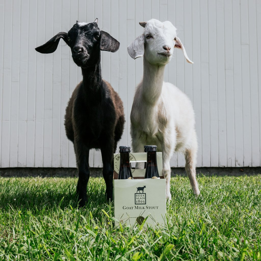 meet goat milk stout