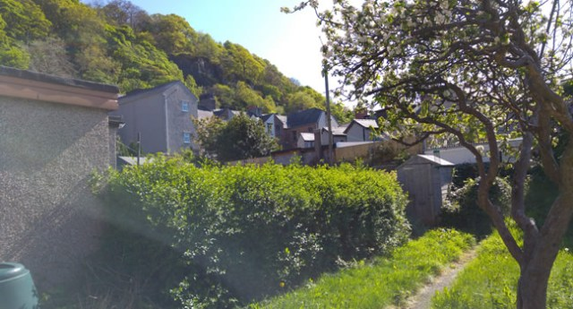 My rather overgrown garden