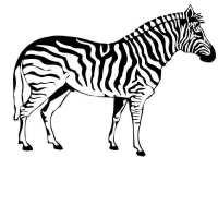 Kleurplaat Zebra