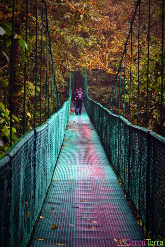 Pont suspendu Canopée