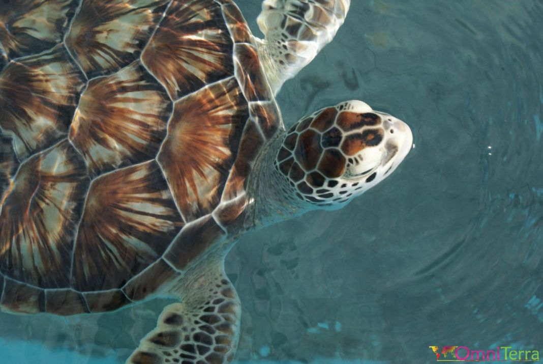 Isla Mujeres-tortue