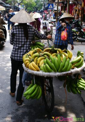 Vietnam - Hanoi - Vendeuse de bananes