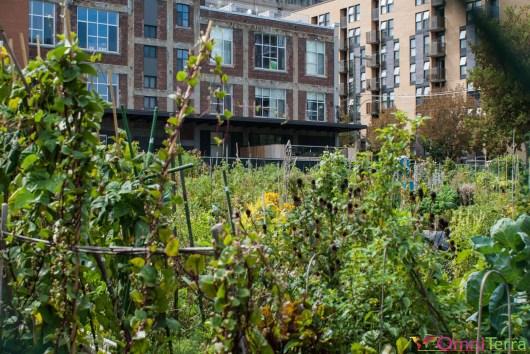 Montréal - Jardin communautaire