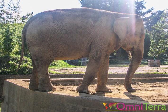 Lyon - Parc de la Tête d'or - Éléphant