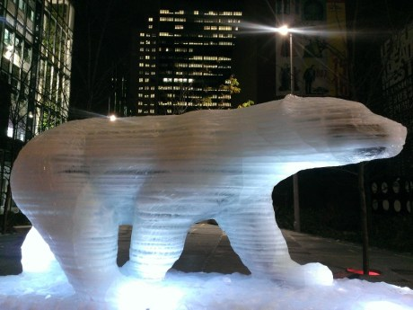 Montréal- Ours polaire sur glaces éphémères 1