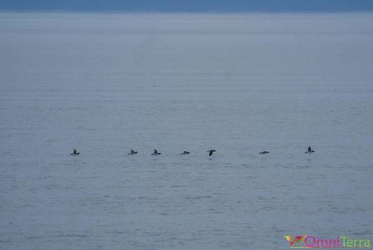 Québec - Observation des baleines - Pingouins