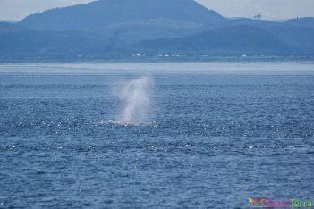 Québec - Observation des baleines - Souffle