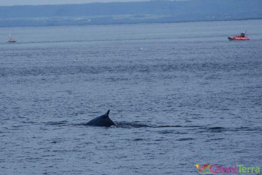 Quebec - Observation des baleines - zodiac au loin