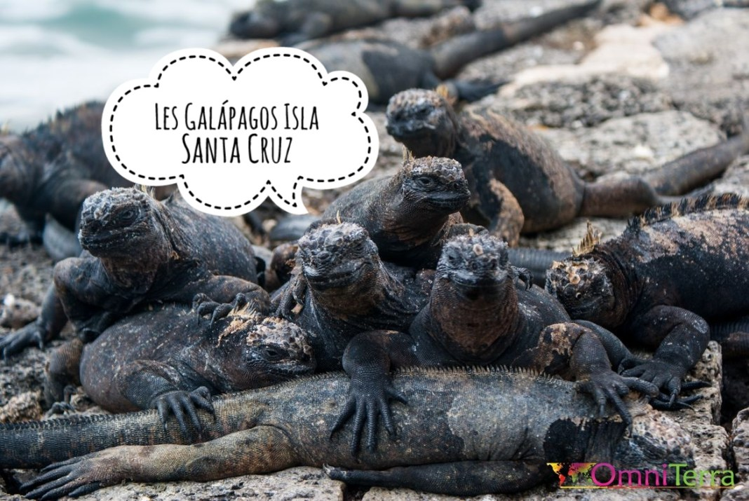 galapagos-santa-cruz-iguanes-2
