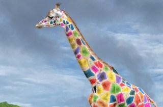 Omunis technologies Girafe couleurs