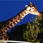 夜の動物園に巨大すぎるお好み焼き!夏の思い出に!サマーナイト「おおむた」探検ツアー開催!