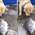 Cão tenta salvar peixes, e o gesto do animal emocionou as redes sociais