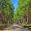 Forest near Tuchola