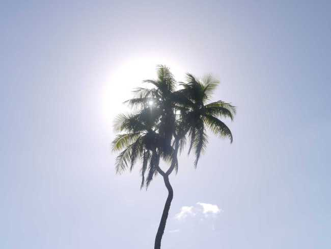 """Three-headed palm tree"""