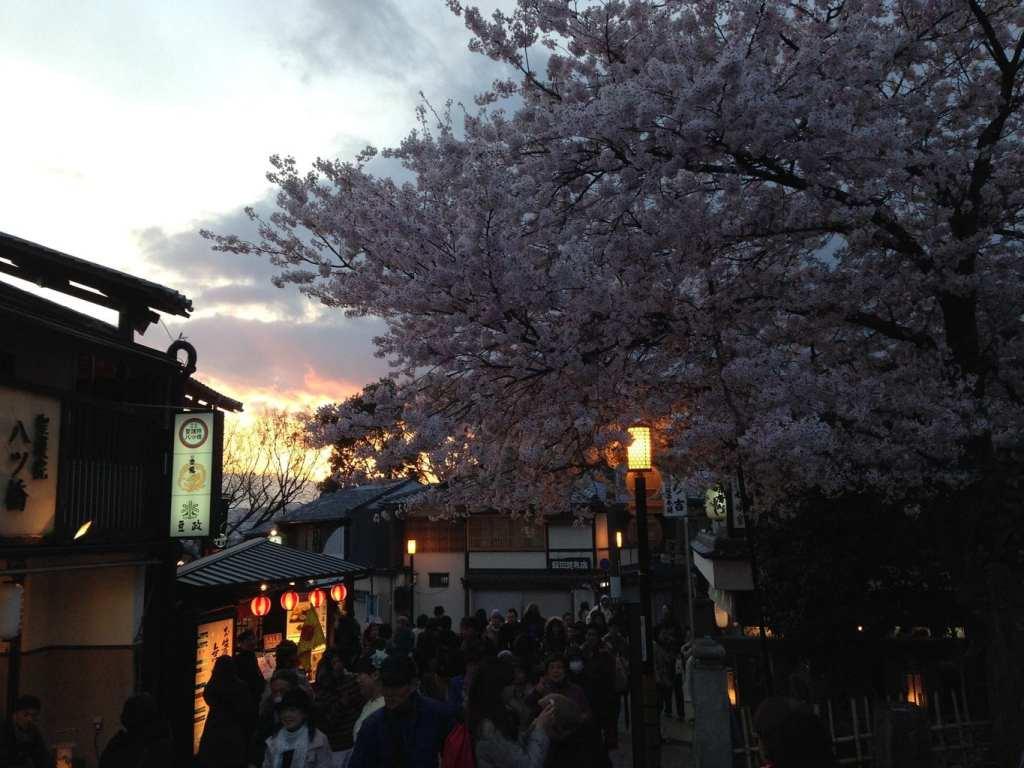2014 in travel Sakura in Kyoto