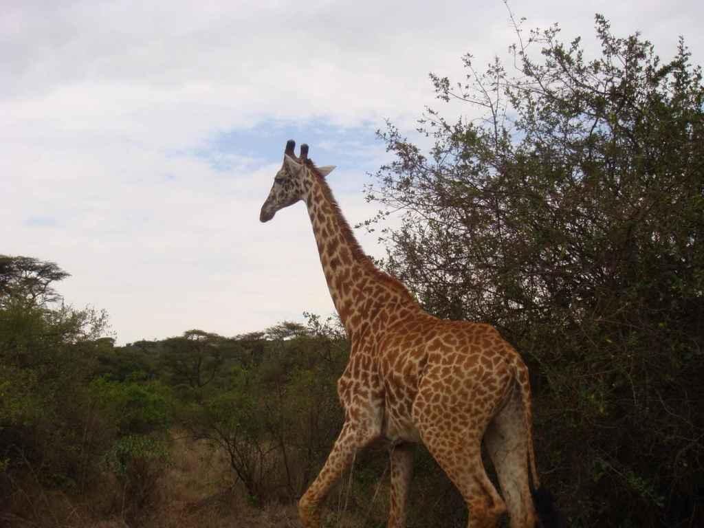 Pre-work safari