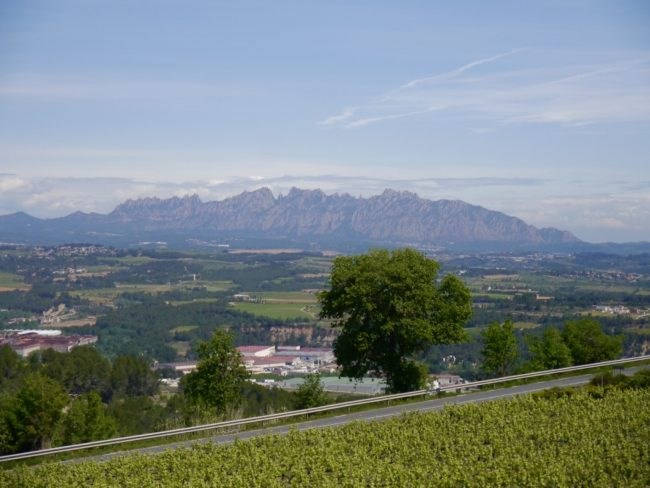 """""""View from country house at Cava Llopart Gran Reserva Tour"""""""