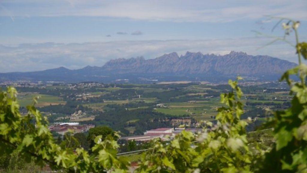 Cava Llopart Montserrat views