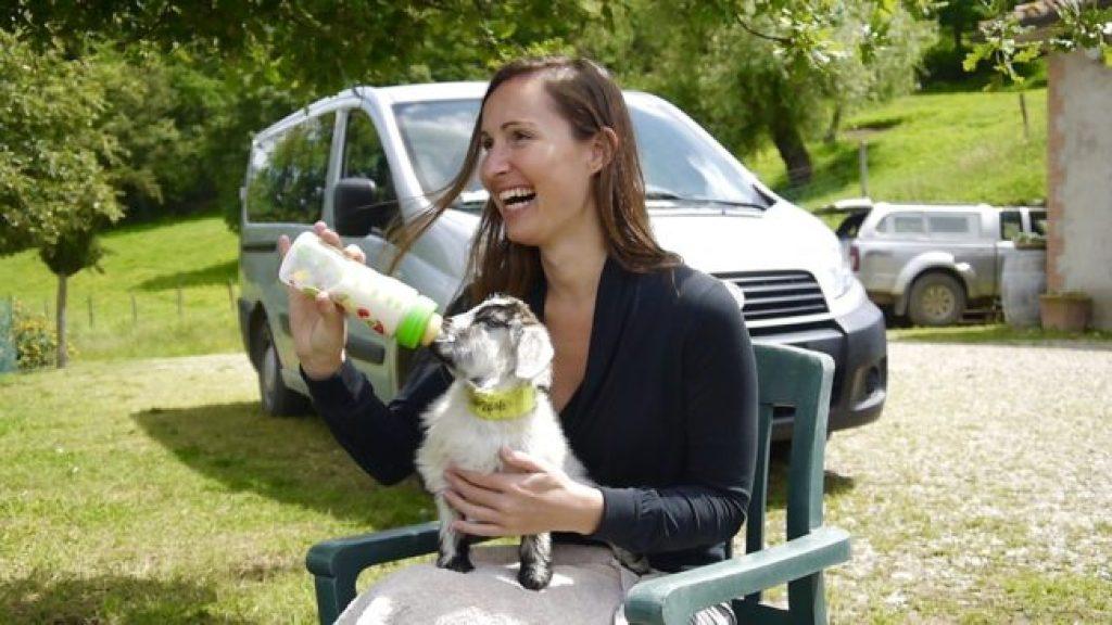 Feeding little cashmere goat