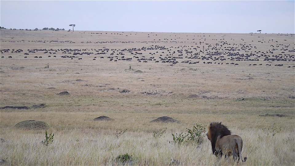 Who are the big five animals of africa fun facts about for Lifetime fishing license ny