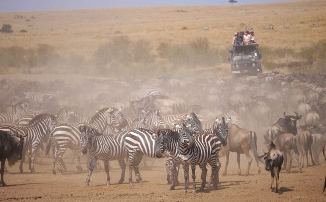 """Masai Mara Great Migration"""