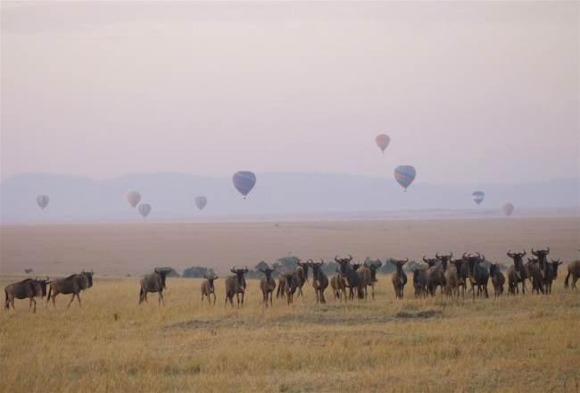 """Wildebeest at sunrise in the Masai Mara"""