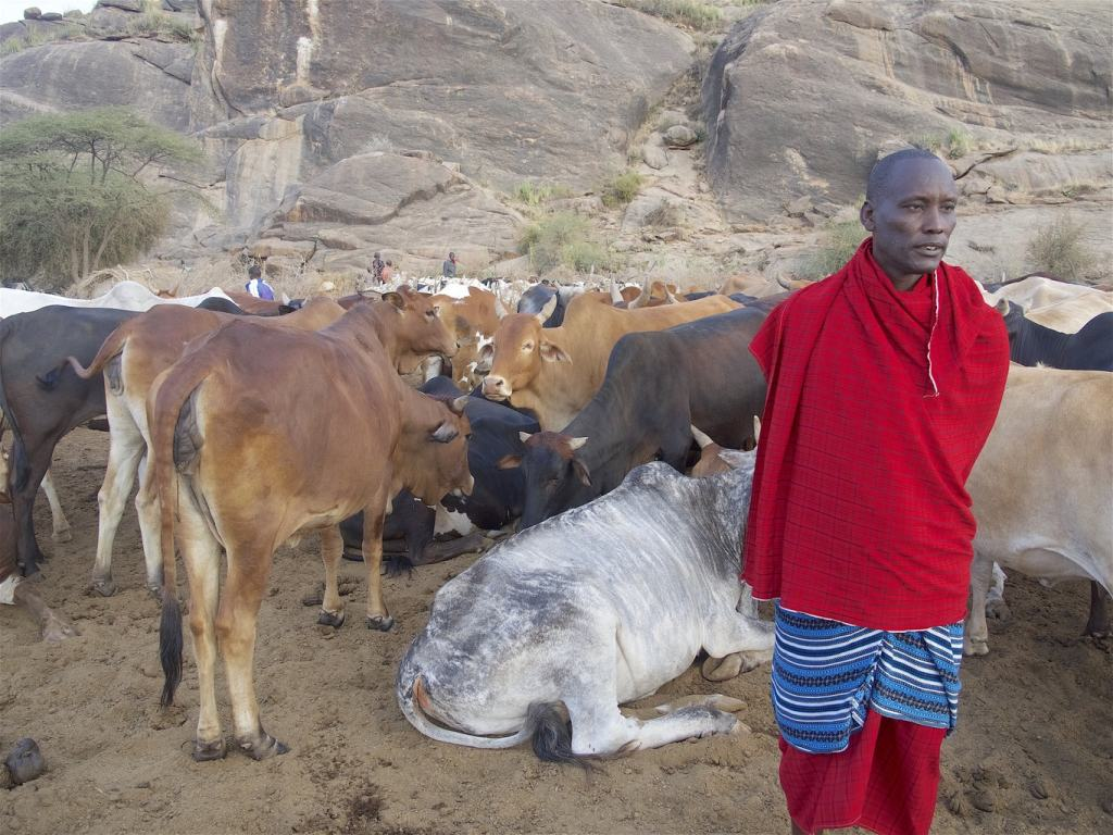 Solomon, our Masai guide, with his cattle