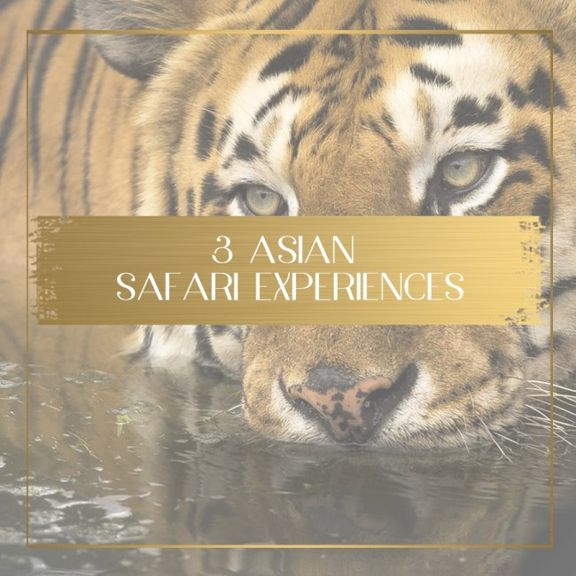Safari in Asia feature