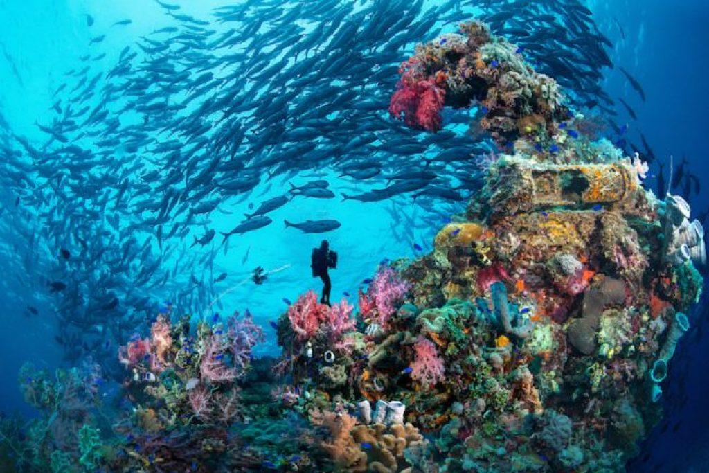 Best Diving Chuuk Lagoon