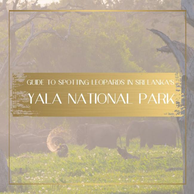 Yala National Park Feature