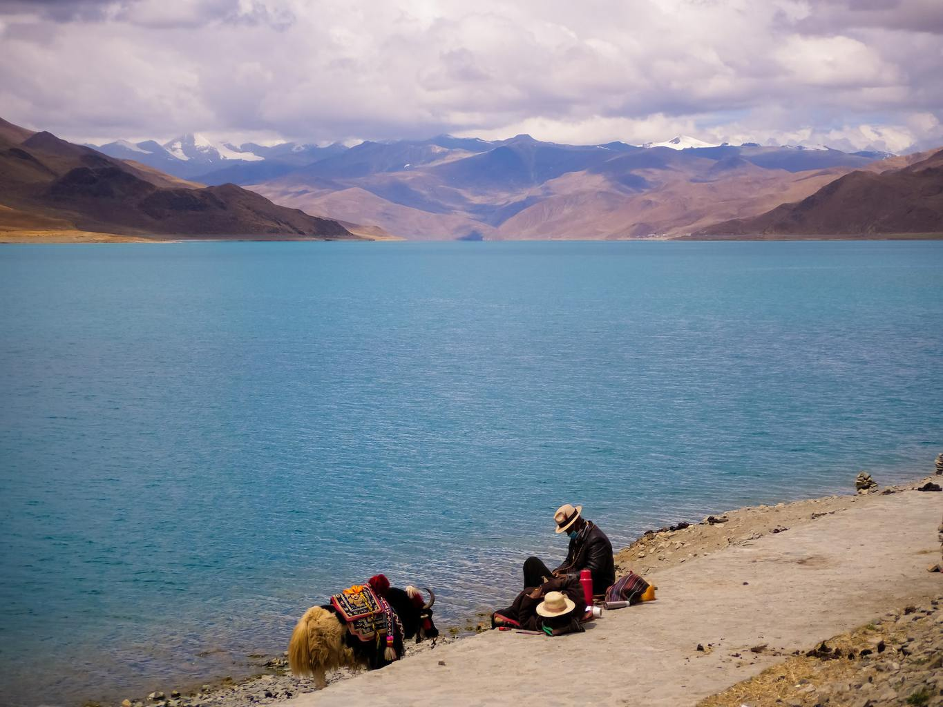 Herder and yak at Yamdrok lake