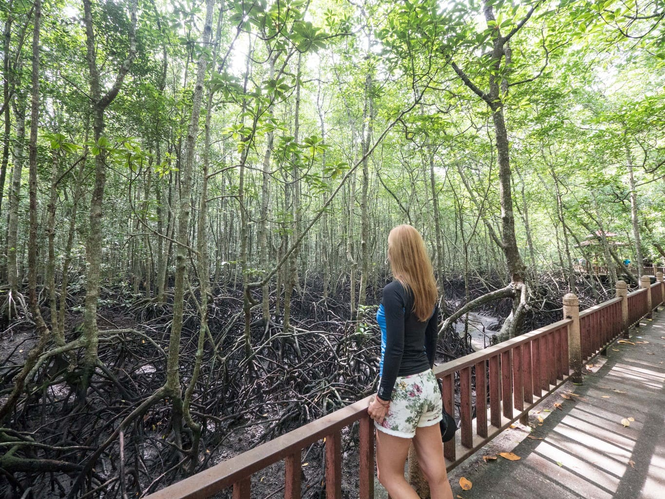 Looking at the mangroves