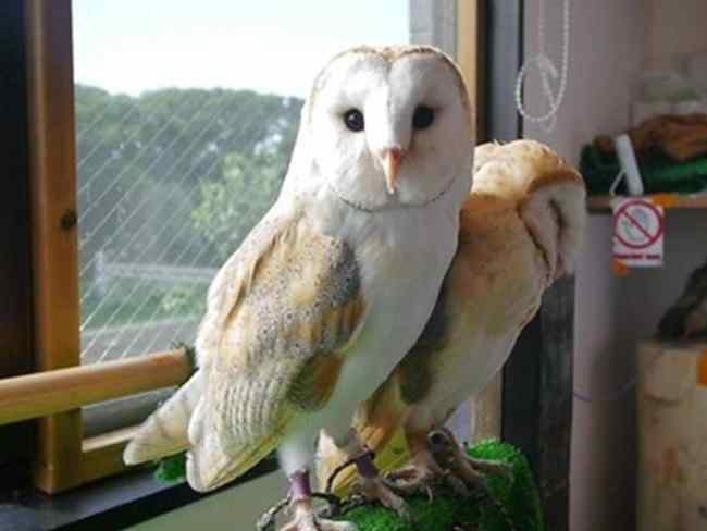 best of Tokyo Owl Cafe