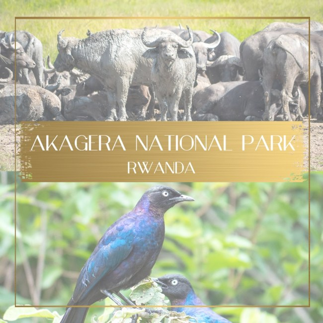 Akagera National Park feature