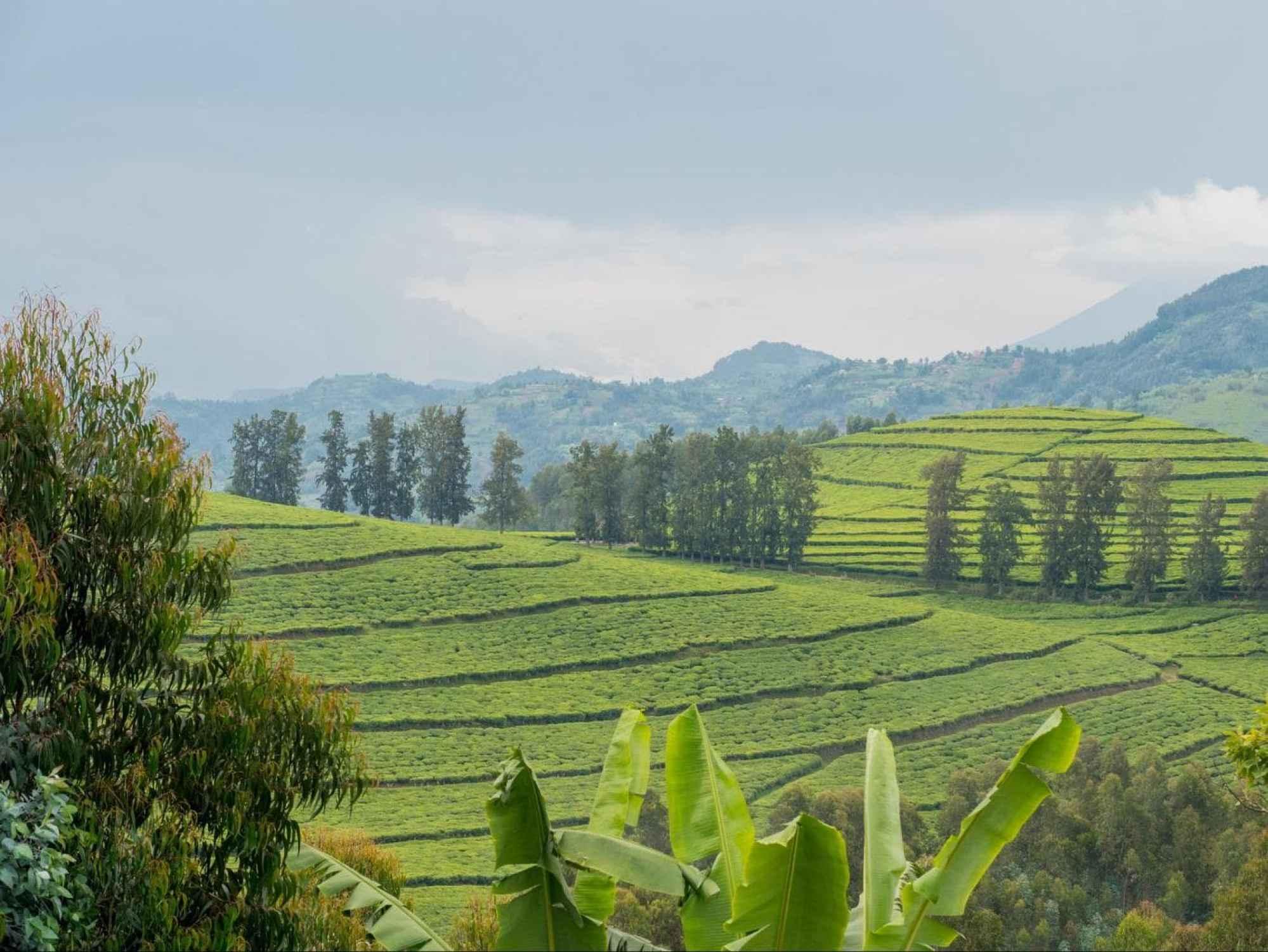 The landscapes near Gishwati Forest.jpg