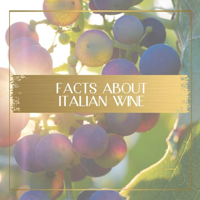 Facts About Italian Wine feature
