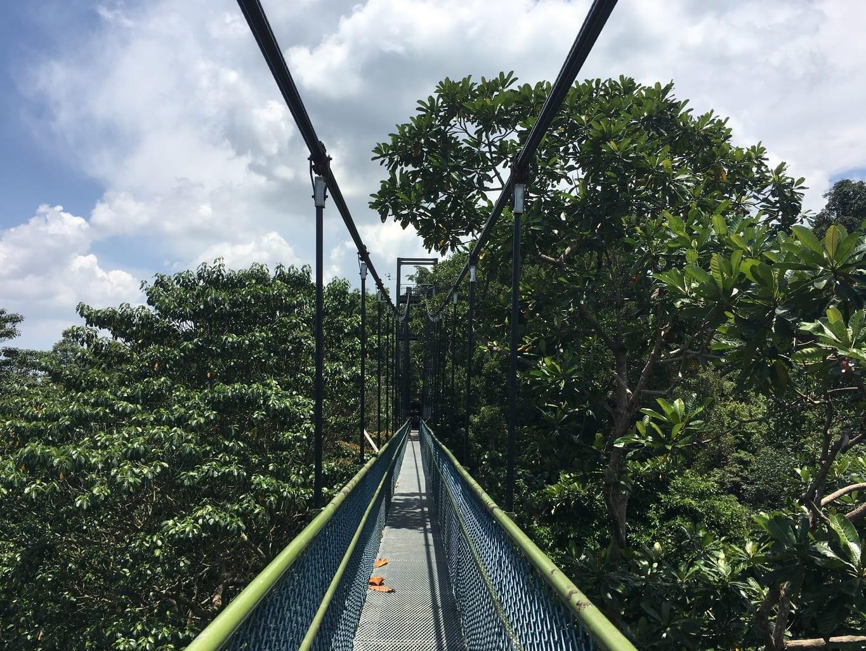 MacRitchie suspended bridge