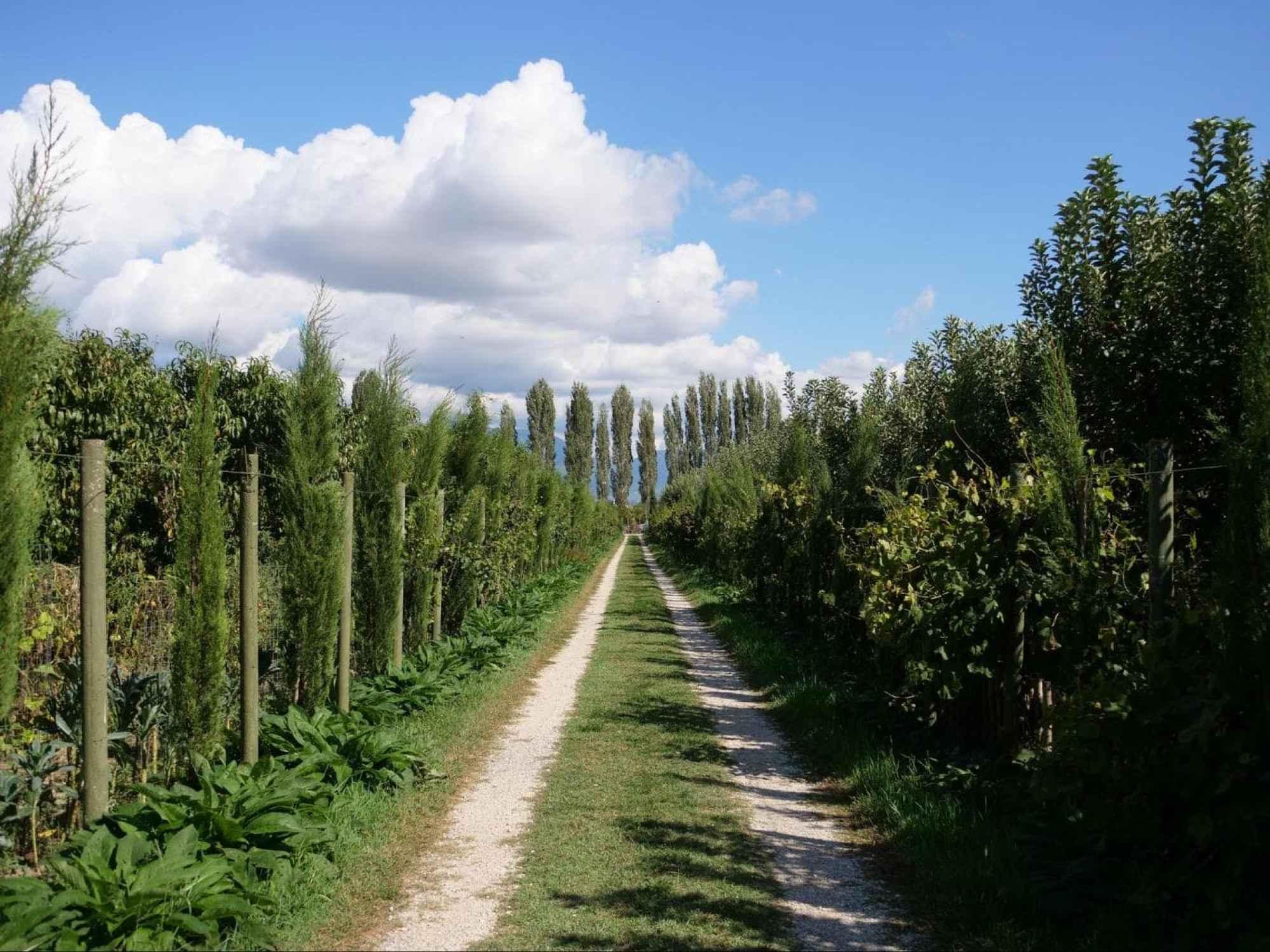 Uka Farm