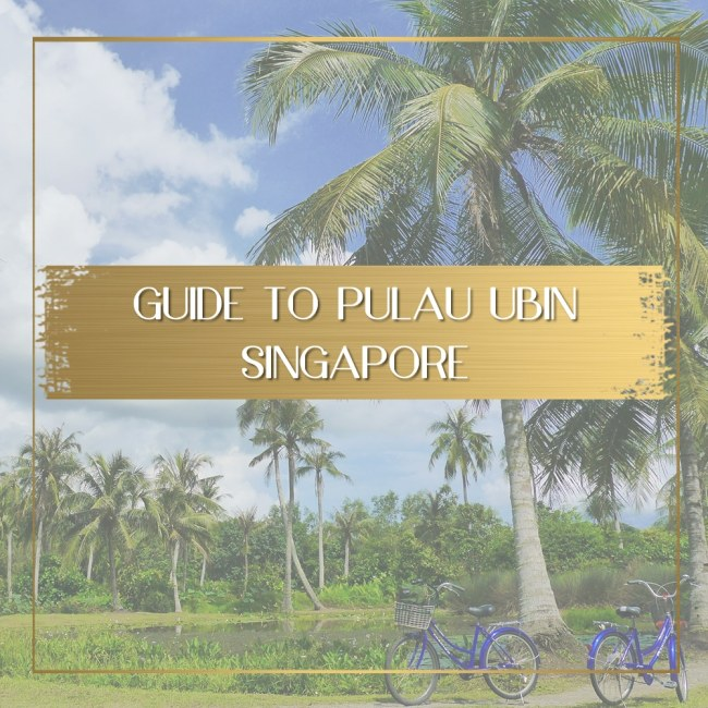 What to do in Pulau Ubin feature