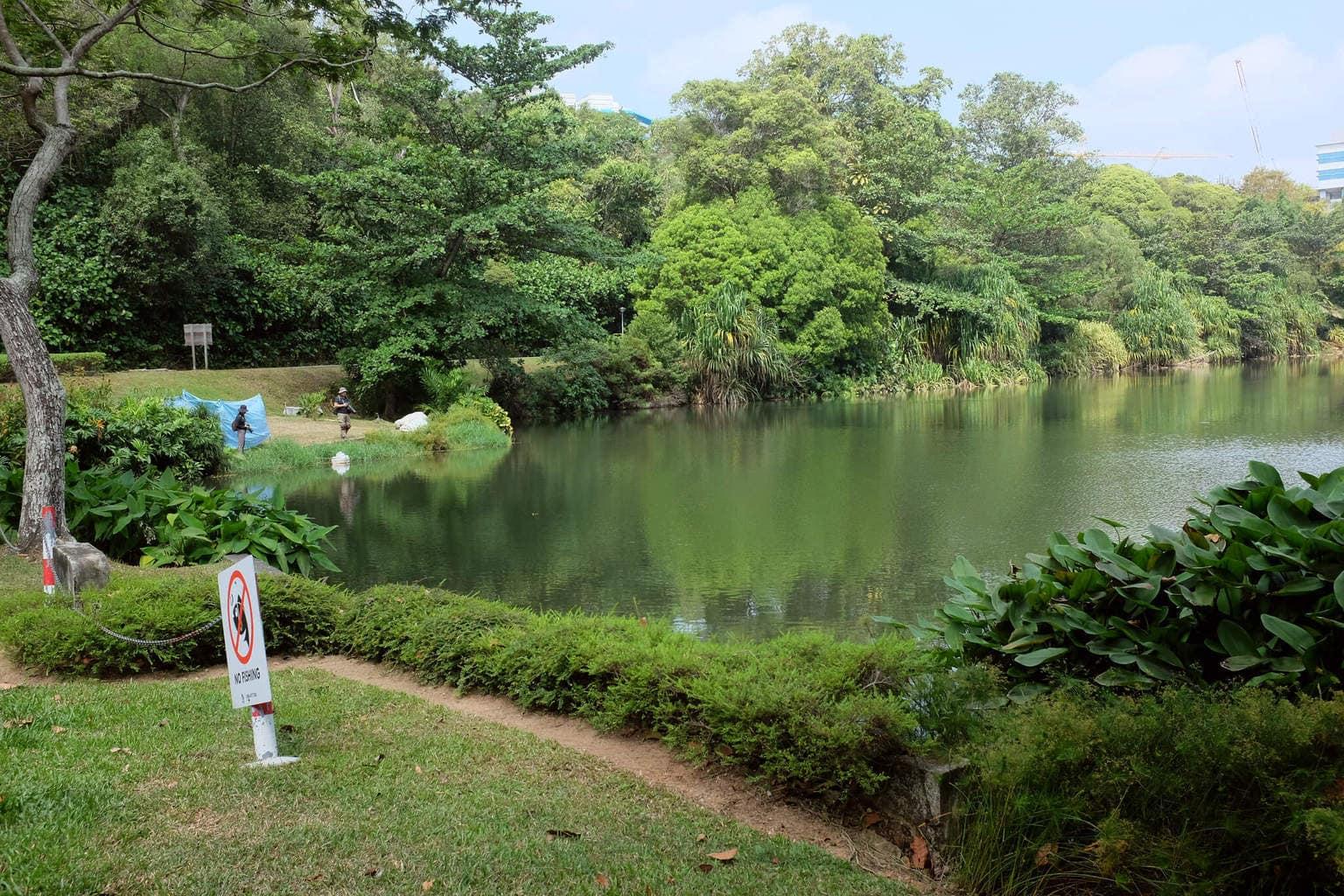 Pond at Kent Ridge Park